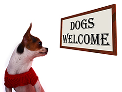 Dogs Welcome
